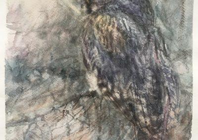 lapinpöllö